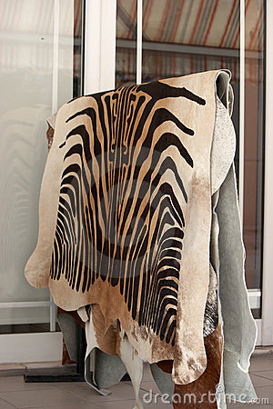 Zebra Hyde