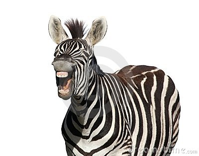 Zebra Laugh or Shout