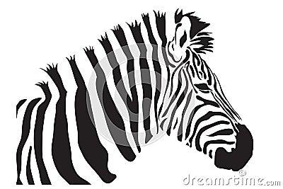 Zebra  outline silhouette