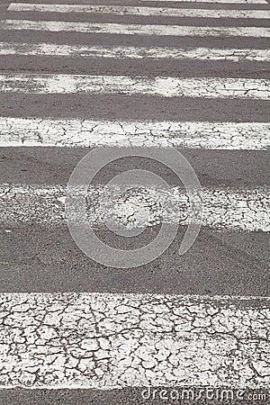 Zebra - pedestrian road