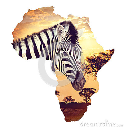 Free Zebra Portrait On African Sunset With Acacia Background. Map, Continent Of Africa. Wildlife And Wilderness Map Of Africa Concept Royalty Free Stock Image - 85857956