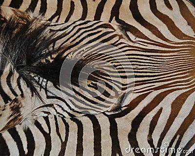Mat hide zebra print