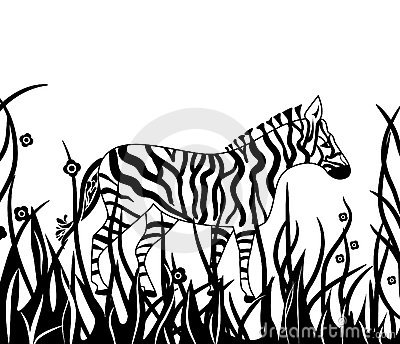 Zebra in safari