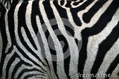 Zebra Shape Template, Crafts