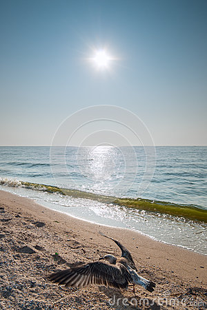 Zeemeeuw en zon