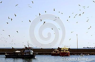 Zeemeeuwen die over haven vliegen