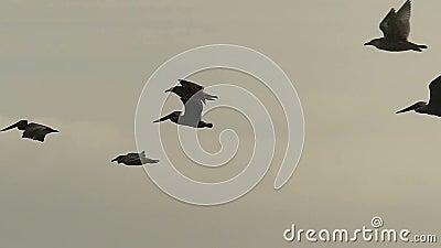 Zeevogels die over de Oceaan in Langzame Motie vliegen