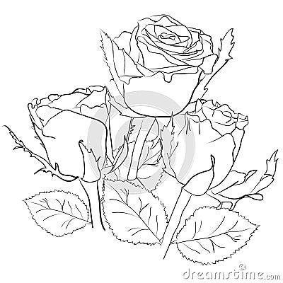 zeichnen mit rosen stockfotografie bild 32595672. Black Bedroom Furniture Sets. Home Design Ideas