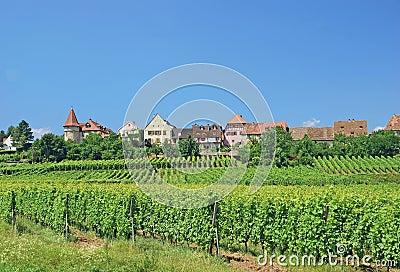 Zellenberg,Alsace,France