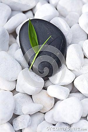 Free Zen Royalty Free Stock Photos - 3008218