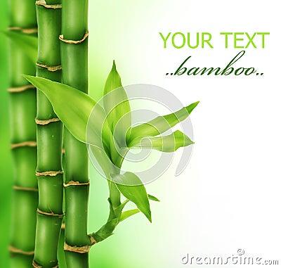 Free Zen Bamboo Stock Image - 12203781
