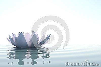 Zen flower loto in water