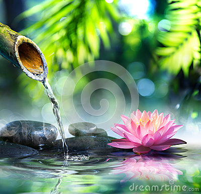 Free Zen Garden With Black Stones And Waterlily Royalty Free Stock Photos - 46106858