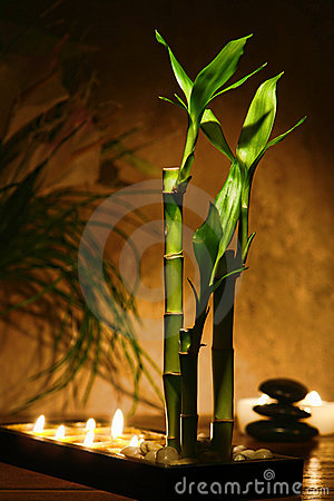 Zen Meditation Candles and Bamboo Plants