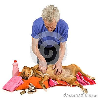 Zen moment for dog
