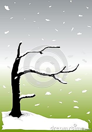 Zen Snow, Vector