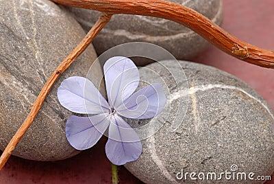 Zen spirit
