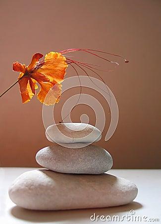 Zen still life with tropical flower