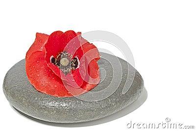Zen stone with red poppy flower