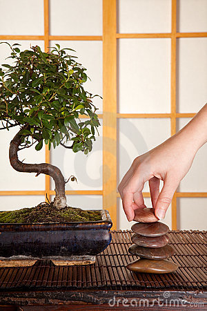 Zen stones and bonsai