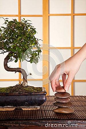 Zen stones and bonsai