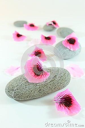 Zen stones path
