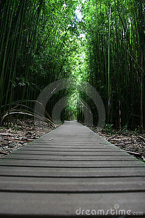 Free Zen Walking Path In Forest Stock Photos - 1746273