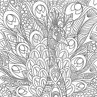 Zentangle Stylized Peacock Stock Vector Image 67965023