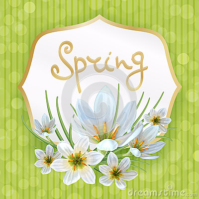 Zephyranthes spring Vector Illustration