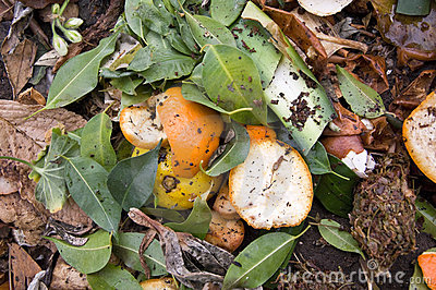 Zest on a compost heap