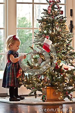 Ziehen des Weihnachtsbaums
