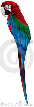 Zielona ary papugi czerwień