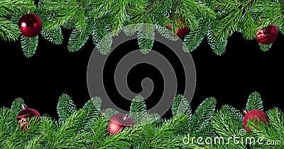 Zielona gałąź drzewa sosnowego wyizolowana na czarno-czerwonym ekranie tła zbiory wideo