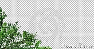 Zielona gałąź drzewa sosnowego wyizolowana na czarno-czerwonym ekranie tła zbiory