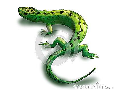 Zielona jaszczurka