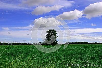Zielone pola niebieskiego nieba tree