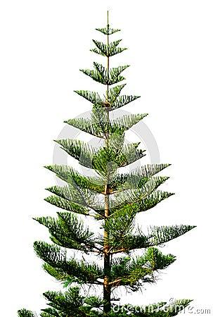 Zielony egzota drzewo