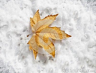 Zimy przybycie