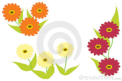 Zinnia flowers in three colours