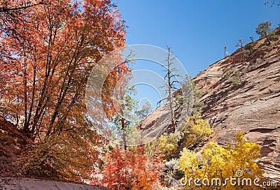Zion Autumn Colors