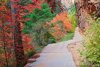 Zion Forest Path