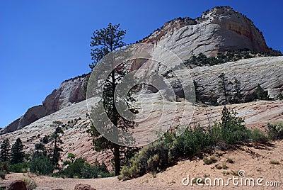 Zion park -stone desert landscape
