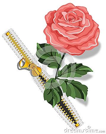 Zipper and rose