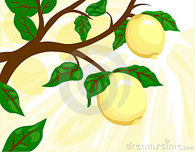 Zitrone-Baum