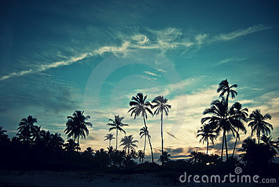 Zmierzch tropikalny