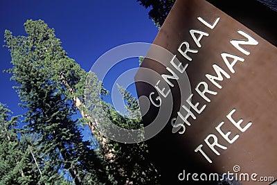 Znak dla Generał Sherman Drzewo