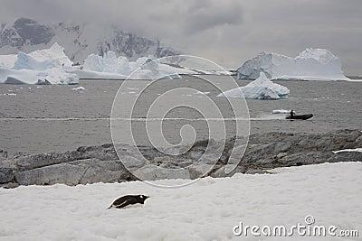 Zodiac exploring the ocean, Antarctica.