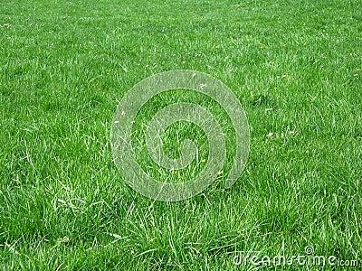 Zone d herbe