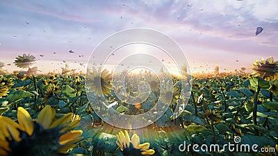 Zonnebloemen op het gebied bij zonsopgang Mooie gebieden met zonnebloemen, vlinders en insecten in de zomer