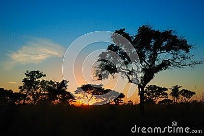 Zonsondergang in de Afrikaanse struik (Zuid-Afrika)